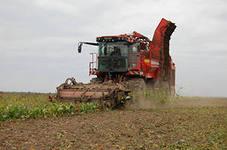 В Заинском р-не Республики собран рекордный урожай свеклы