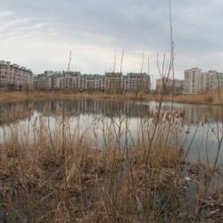 Страсти озерные: как обустроить озеро Харовое