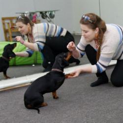 Собачий фитнес в Набережных Челнах