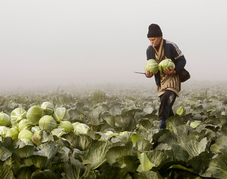 Беларусь планирует увеличить поставки продуктов в Россию