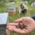 Массовой гибелью пчел заинтересовались в Государственной Думе
